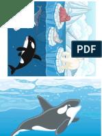 animale polare
