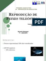 Reprodução - introdução e biologia da reprodução