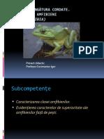 Clasa Amfibienii.pptx