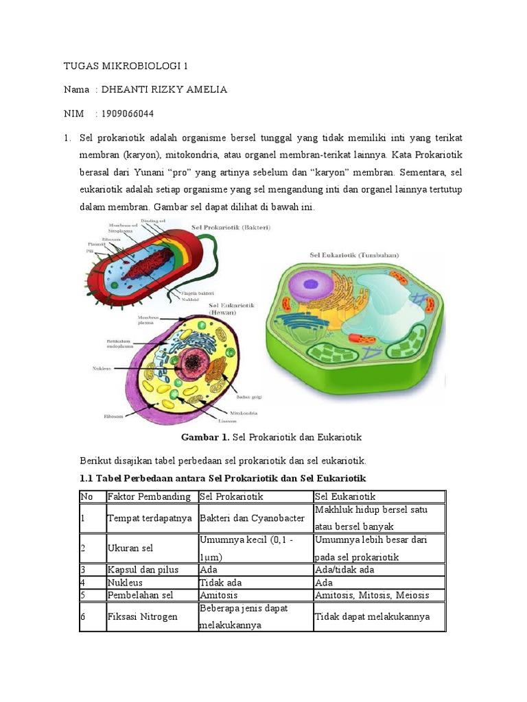 Gambar 1 Sel Prokariotik Dan Eukariotik