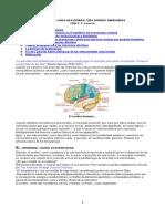 cerebro-ecosistema-sintesis-heterodoxa.doc