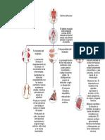 aporte-sistemamuscular-zenethyusseff..docx