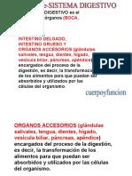 sistenmaDigestivo.pdf