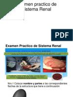 Examen practico de Sistema Renal dia 31-3-2020 Kelvin irigoyen .pdf