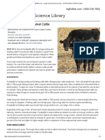 nutrition of market cattle