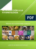 Clasificacion de la colonia fúngica vista en una placa de Petri.pptx