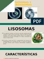 Lisosomas y peroxisomas - biología