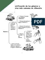 claves hongos de Albacete