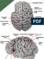 Neuro Lab Bible.pdf