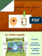 2) La cellula vegetale