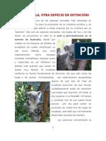 Los Koalas, Reportaje