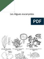Les Algues eucaryotes.pptx