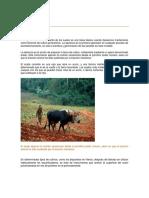 La labranza.pdf