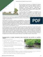 Autoridad de los Recursos Acuáticos de Panamá _ Flora Marina