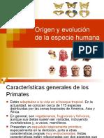 origen y evolucion