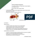 Anatomía y fisiología de Monogástricos y Poligástricos_ AEO.docx