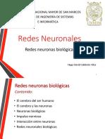 2-Redes Neuronales Biologicas