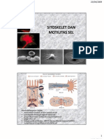 sitoskelet-1