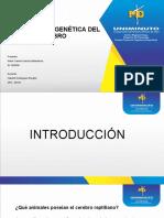 EVOLUCIÓN FILOGENÉTICA DEL CEREBRO.pptx