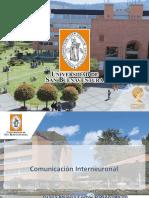 Comunicación interneuronal(1)