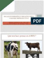 BEN & Reproducción Presentación Buga