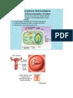 cancer cervical de cuello uterino y celulas tumorales caracteristicas
