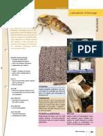 abeil.pdf