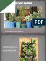 Conservar Cactus
