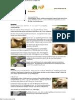 SchweinSWRKindernetz.pdf