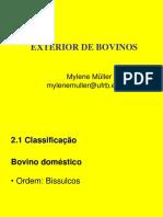 Exterior Bovinos