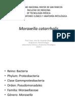 moraxella 2018