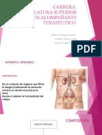 Presentación sistema digestivo y urinario