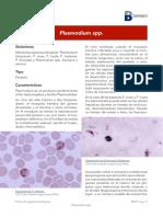 Plasmodium spp - Año 2018