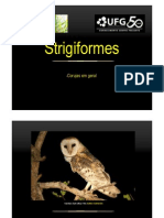 Ordem Strigiformes - ordem das corujas