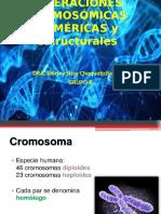 389964007-II-Alteraciones-cromosomicas-numericas-ppt