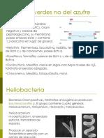 U3d_MicroorganismosFotosinteticos_B_20262