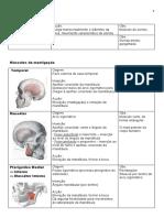 anatomo-fisiologia