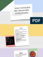 PRIMER TRIMESTRE DEL DESARROLLO EMBRIONARIO (1).pptx