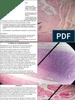Descripciones-organo-Milton-3er-Parcial-1.pptx