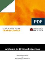 Anatomia Endocrino