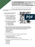CN9 Teste Sistemas Cardiovascular Respiratório 2020
