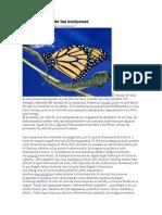 El ciclo de vida de las mariposas