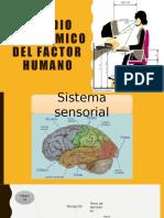 Estudio ergonómico del factor humano