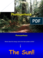 photosynthesis5