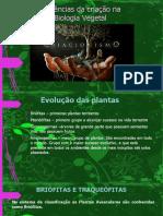 apresentação criacionismo