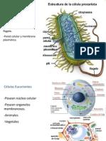 Caracteristicas de Las Celulas