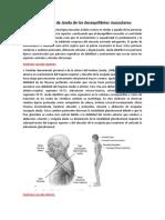 Clasificación de Janda de los desequilibrios musculares (1).docx