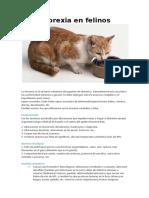 Anorexia en felinos