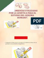 DIAPOSITIVAS-DE-GENETICA-II-UNIDAD-listo (1)