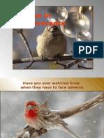 The Birds-IG-PR